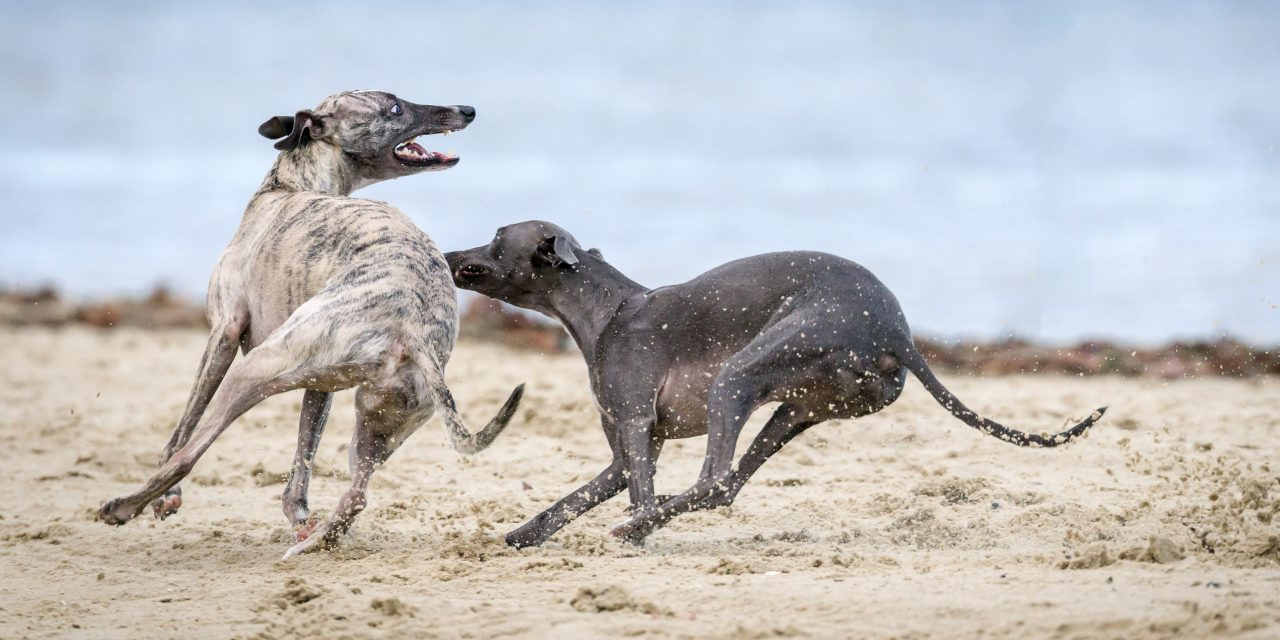 How Can You Place Bets Safely for Greyhound Racing Events?